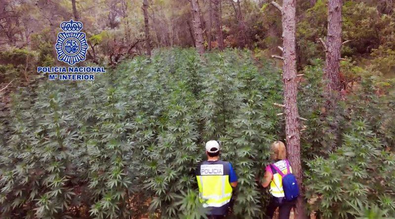 La Policía Nacional desmantela en menos de un año la cuarta plantación de marihuana oculta en los bosques de Huesca