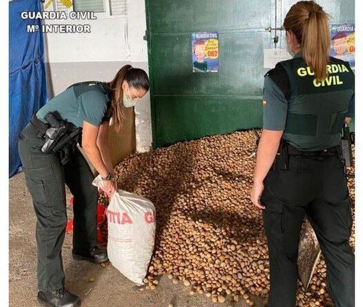 El equipo ROCA de Castellón detiene a dos personas por dos robos diferentes de almendras en l'Alcora y Cabanes