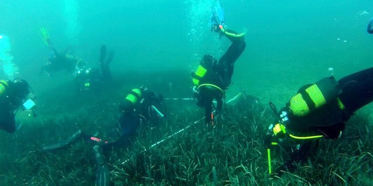 Equipos de buceadores limpian los fondos marinos de Benidorm