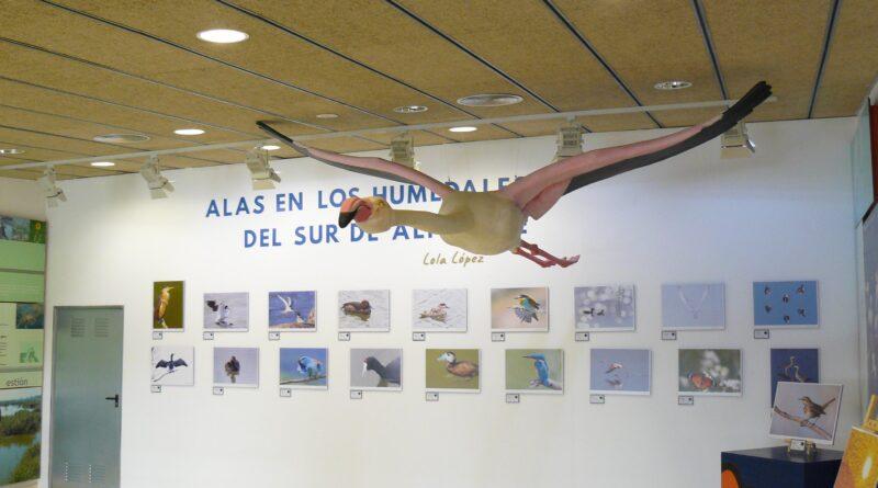 Inaugurada en El Hondo Elx-Crevillent la exposición fotográfica 'Alas en los humedales del sur'