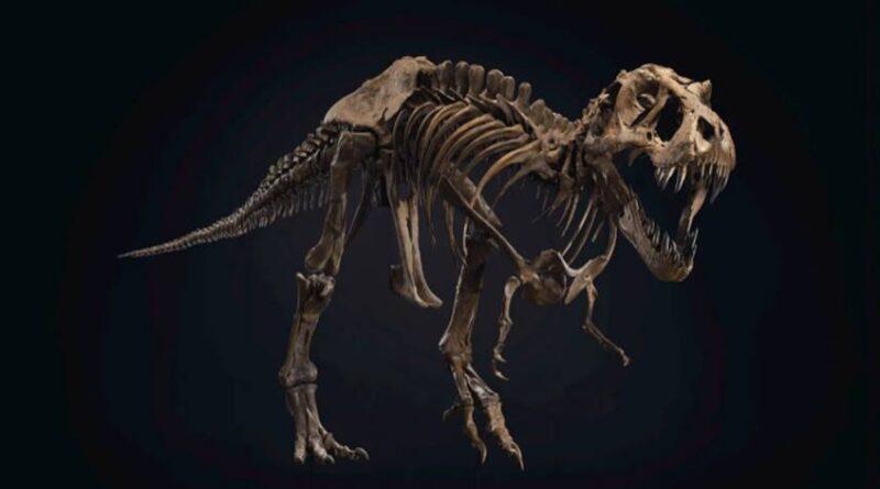 La subasta de un esqueleto de T.Rex inusualmente completo podría romper todos los récord de ventas