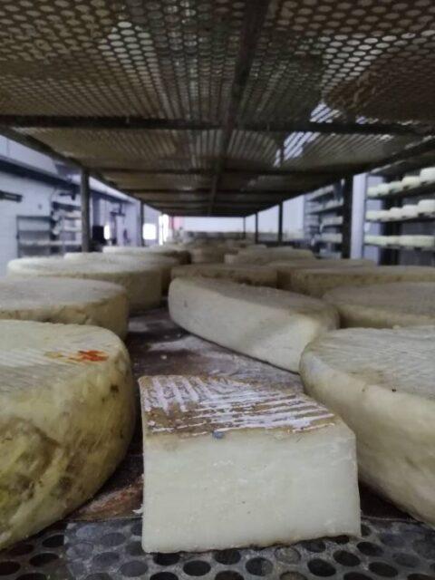 Selección de varios quesos en la empresa afinadora Bolaños. ROSA MOLINERO TRÍAS