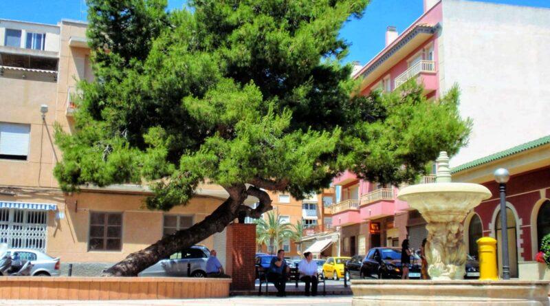 El Ayuntamiento de Elche apoya la candidatura del 'Pino de La Baia' a Árbol Europeo 2021