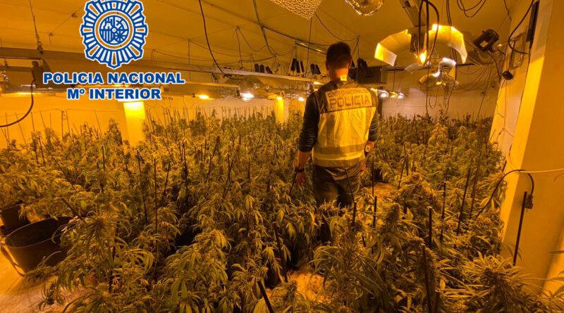 La Policía Nacional desmantela dos plantaciones de marihuana en la Nucia y Altea la Vella y detiene a sus responsables