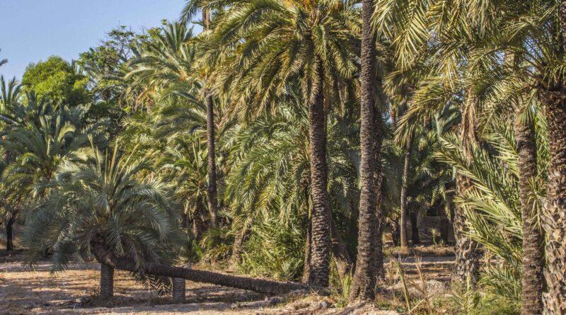 El alcalde de Elche reclama un amplio consenso político en las Cortes Valencianas para salvaguardar el Palmeral