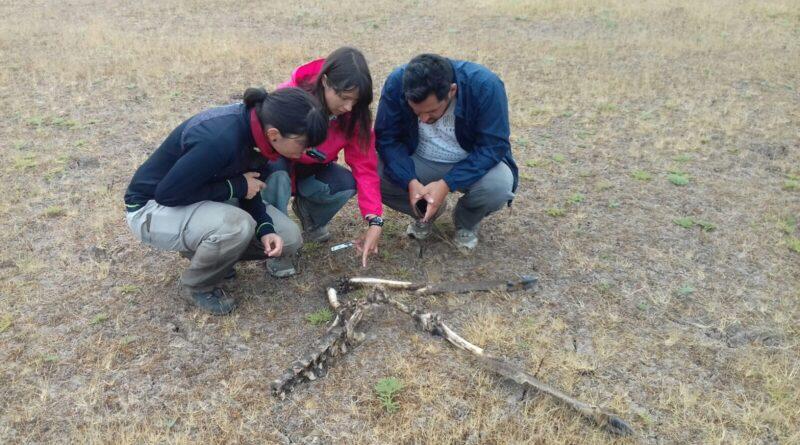 Investigadores del CSIC estudian los procesos de fosilización en Doñana