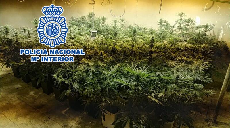 La Policía Nacional intensifica su actividad contra el cultivo y tráfico de marihuana en la provincia de Alicante